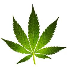 An increase in the cultivation of marijuana is driving higher theft of electricity