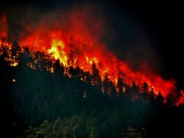Disaster management: wildfires in california