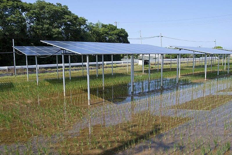 Agrivoltaic