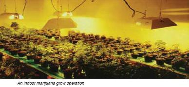 Indoor Marijuana Operation