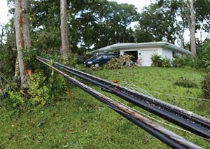 Power lines brought to the ground by falling oak trees in the Tomoka Oaks subdivision in Ormond Beach due to Hurricane Charley